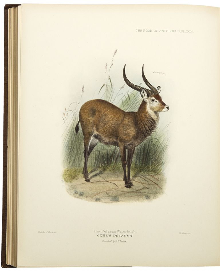 The Book of Antelopes. Philip Lutley SCLATER, Michael R. Oldfield THOMAS.