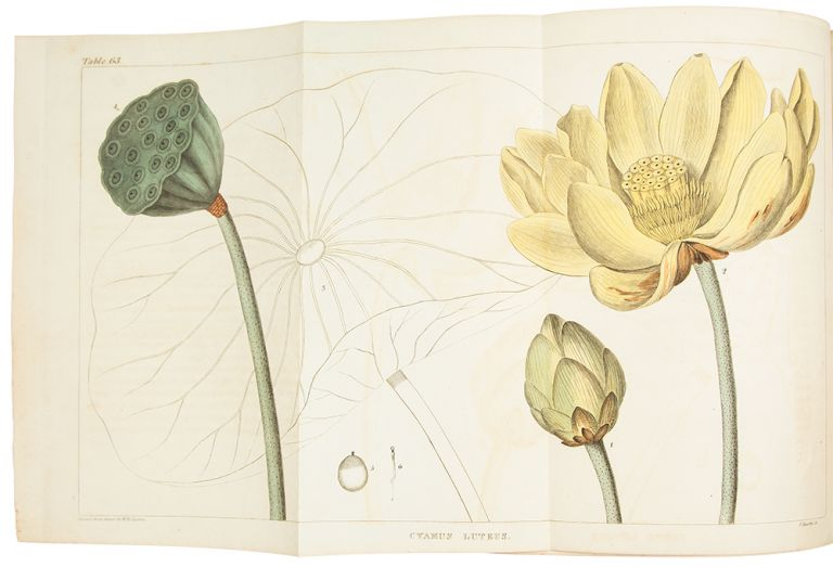 A Flora of North America. Illustrated by coloured figures, drawn from nature. William Paul Crillon BARTON.