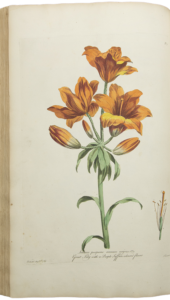The British Herbal, containing one hundred plates of the most beautiful and scarce flowers and useful medicinal plants which blow in the open air of Great Britain, accurately coloured from nature with their botanical characters, and short account of their cultivation. John EDWARDS, 1742- after 1812.