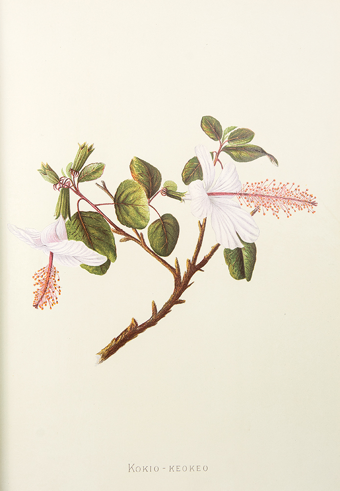 Indigenous Flowers of the Hawaiian Islands: Forty-Four Plates Painted in Water-Colours and Described by Mrs. Francis Sinclair, Jr2. Isabella SINCLAIR.
