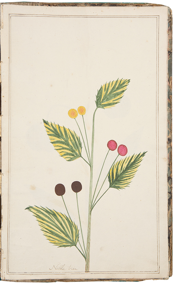[Manuscript herbarium]. BOTANICAL WATERCOLOURS.
