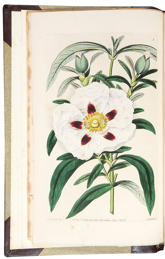 Cistineae. The Natural Order of Cistus, or Rock-Rose, Illustrated by Coloured Figures & Descriptions of all the Distinct Species, and the most Prominent Varieties, that could be at Present Procured in the Gardens of Great Britain; with the Best Directions for their Cultivation and Propagation. Robert SWEET.