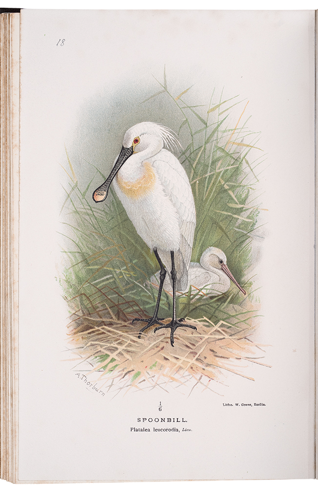 Coloured Figures of the Birds of the British Islands. Thomas Littleton Powys LILFORD.