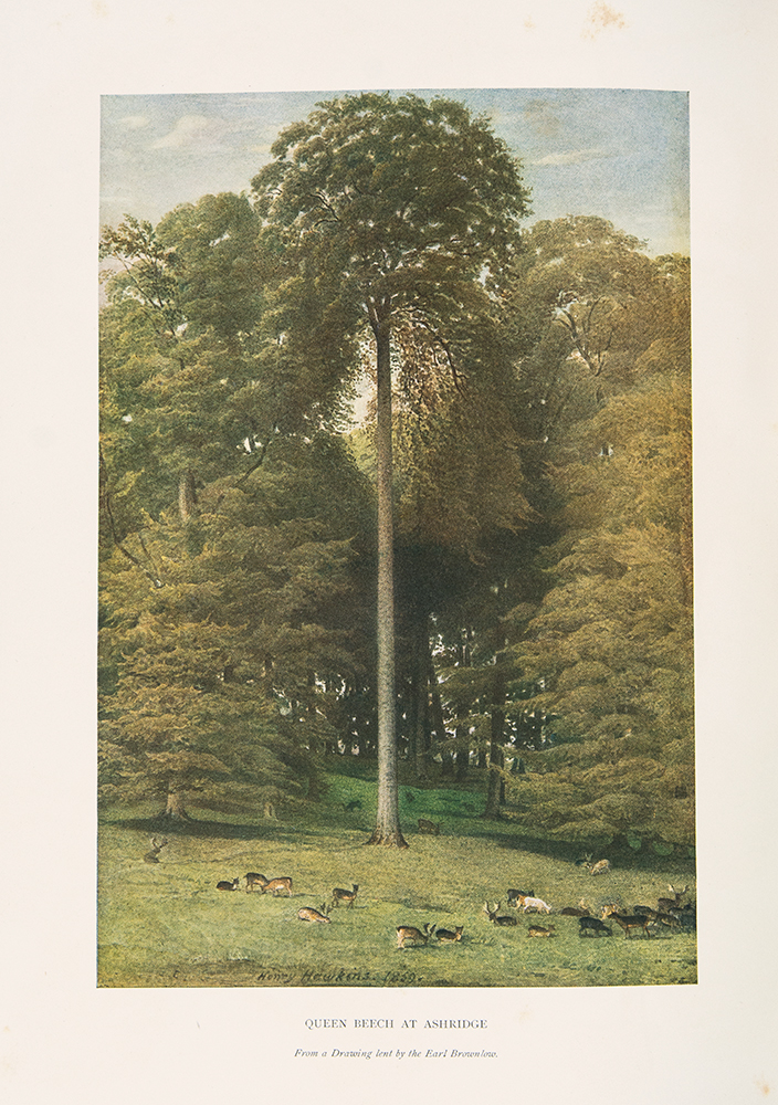 The Trees of Great Britain & Ireland. Henry John ELWES, Augustine HENRY.