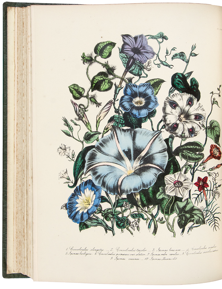The Ladies' Flower-Garden of Ornamental Annuals ... Second Edition. Jane Wells LOUDON.