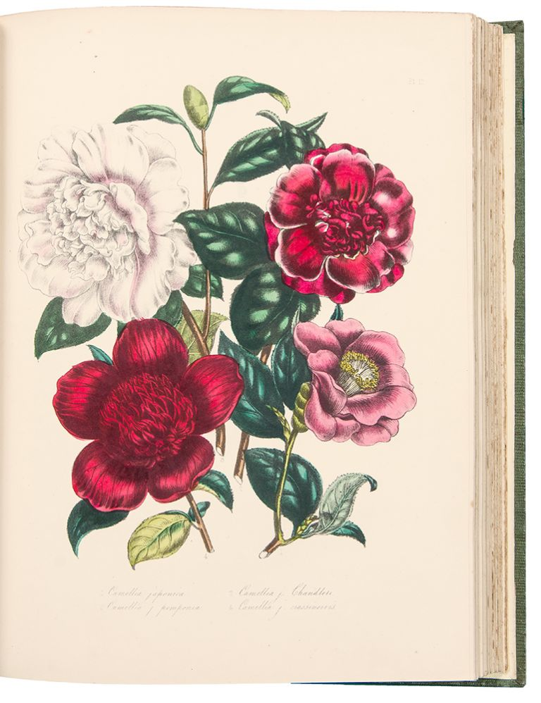 The Ladies' Flower-Garden of Ornamental Greenhouse Plants ... Second Edition. Jane Wells LOUDON.