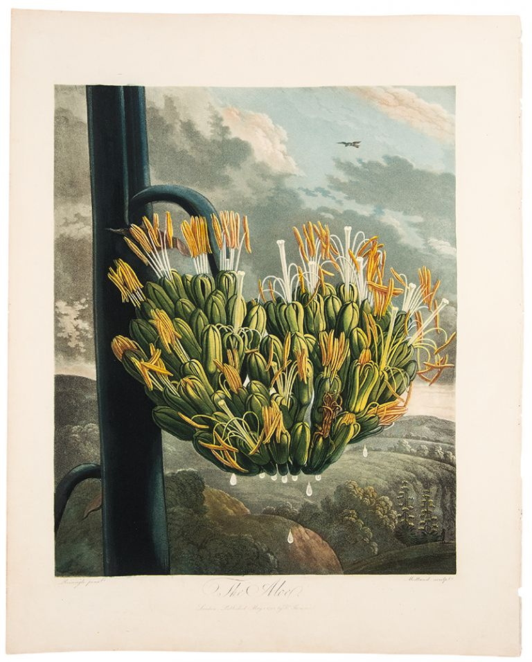 The Aloe. Robert John THORNTON, - Philip REINAGLE.