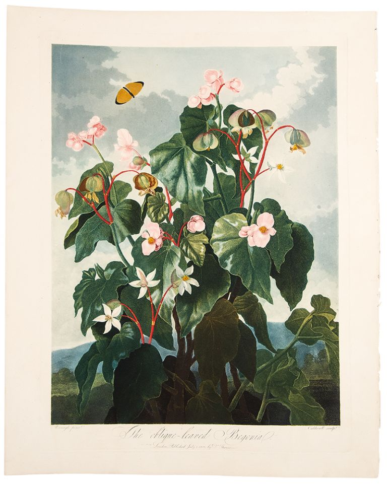 The Oblique-Leaved Begonia. Robert John THORNTON, - Peter REINAGLE.