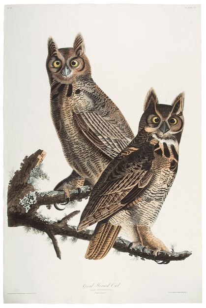 Great Horned Owl. John James AUDUBON.