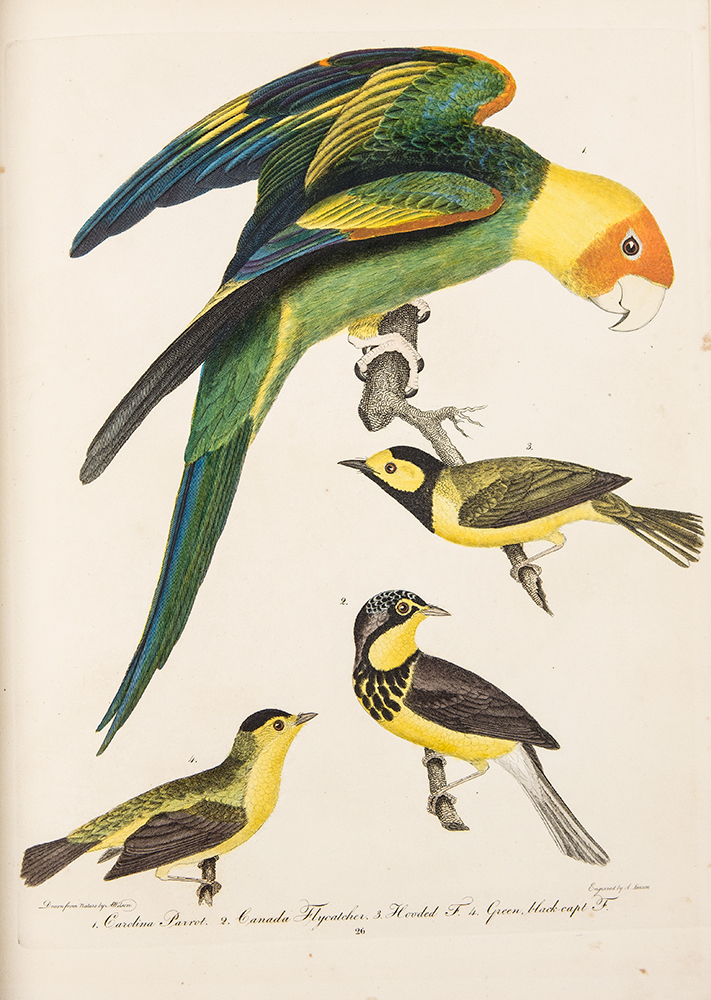 American Ornithology; or the Natural History of the Birds of the United States ... Plates. Alexander WILSON.
