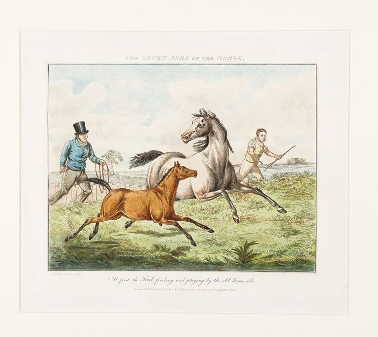 The Seven Ages of the Horse. Henry ALKEN.