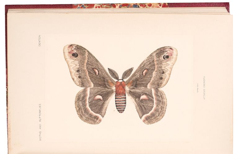 Moths and butterflies of the United States East of the Rocky Mountains. Sherman Foote DENTON.