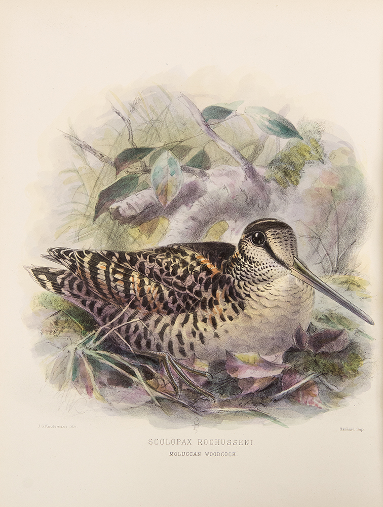 The Geographical Distribution of the family Charadriidae, or the Plovers, Sandpipers, Snipes, and their Allies. Henry SEEBOHM.