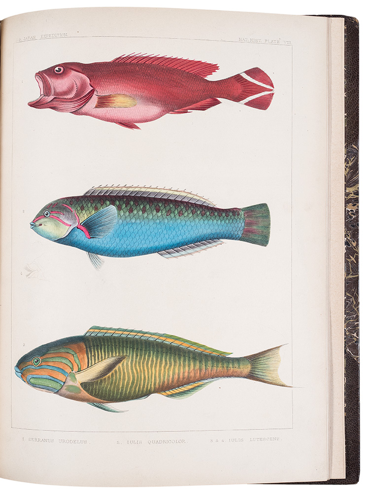 Notes on Some Figures of Japanese Fish taken from recent specimens by the artists of the U.S. Japan Expedition. PERRY EXPEDITION - James Carson BREVOORT.