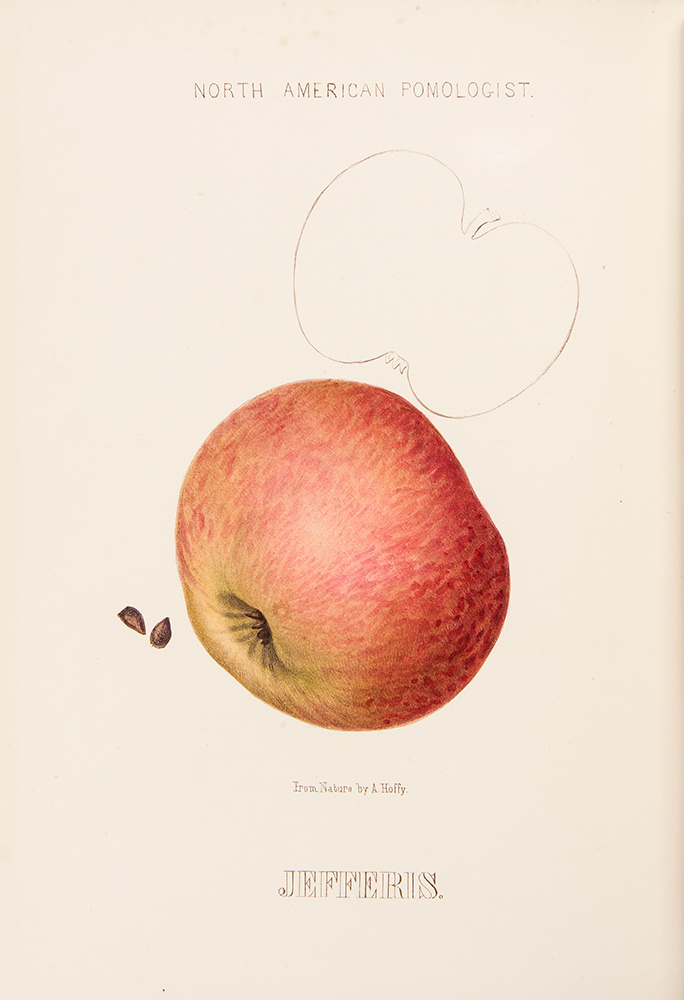Hoffy's North American Pomologist, containing numerous finely colored drawings, accompanied by letter press descriptions, &c, of fruits of American origin. Edited by William D. Brincklé. fl., lithographer, publisher.