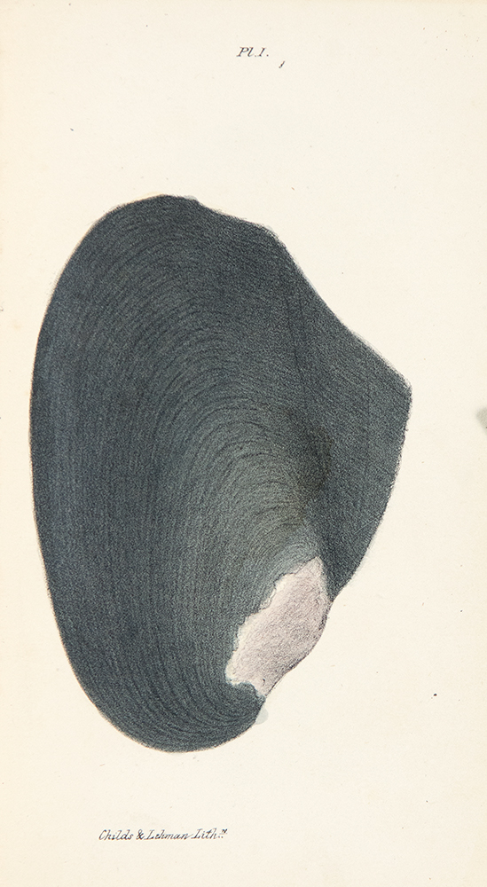 New Fresh Water Shells of the United States, with Coloured Illustrations, and a Monograph of the Genus Anculotus of Say; Also a Synopsis of the American Naiades. Timothy Abbott CONRAD.
