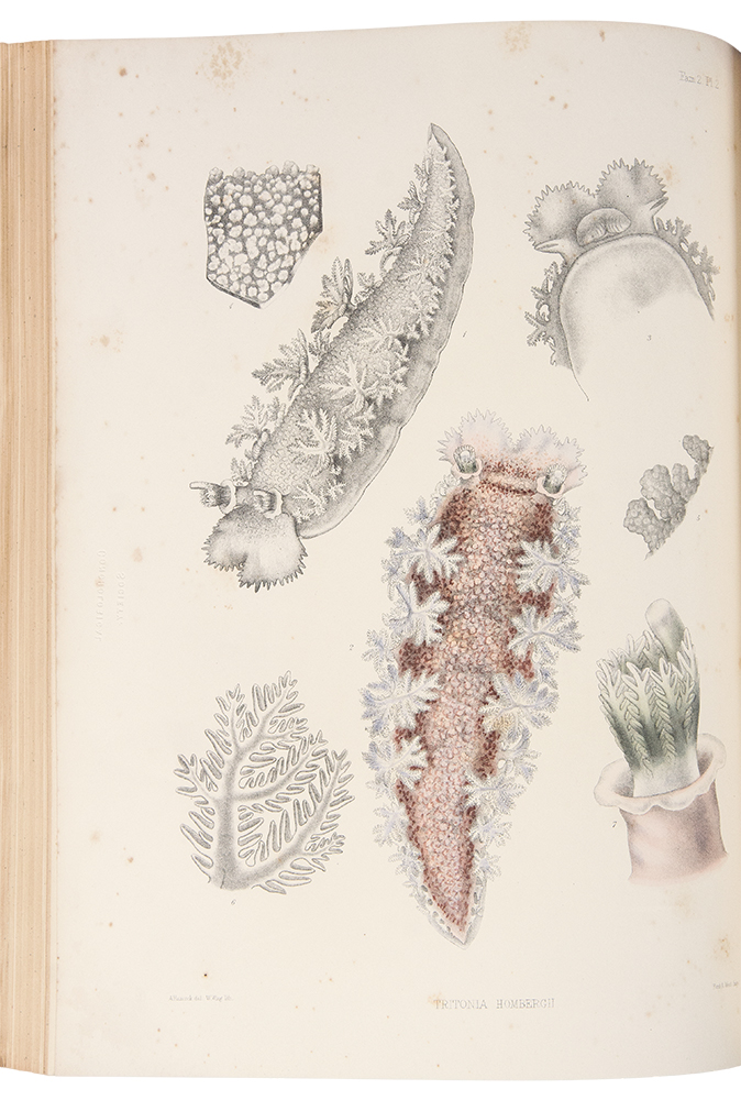 A Monograph of the British Nudibranchiate Mollusca. Joshua ALDER, Albany HANCOCK.