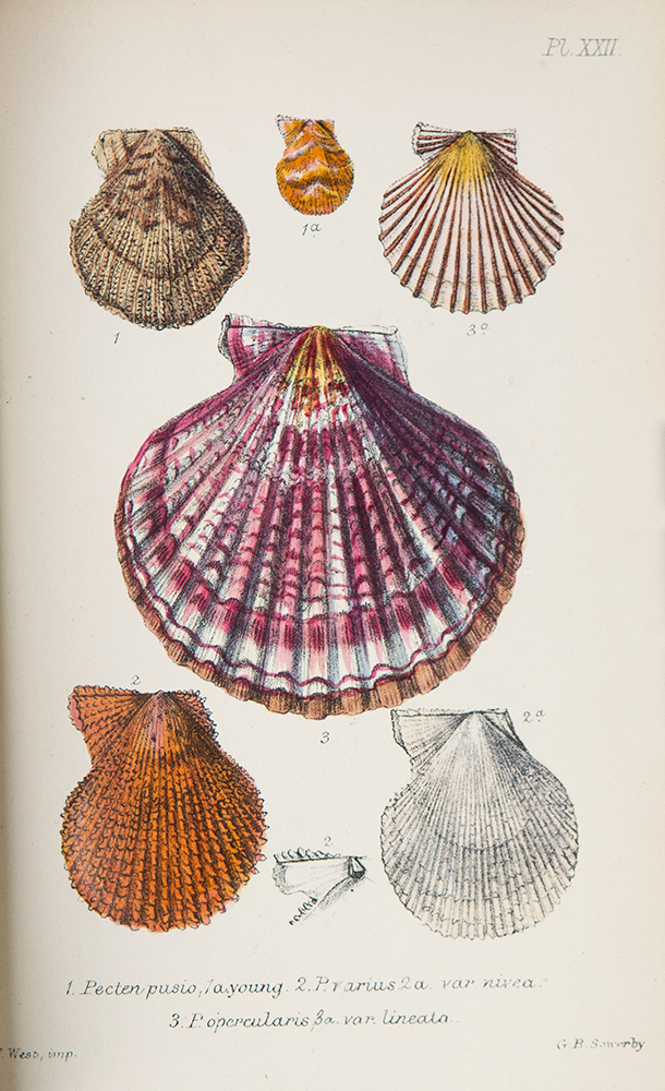 British Conchology or an Account of the Mollusca which now inhabit the British Isles and the surrounding seas. John Gwyn JEFFREYS.