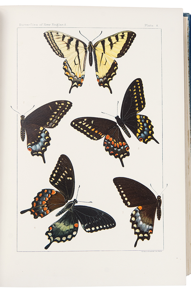 The Butterflies of the Eastern United States and Canada with Special Reference to New England. Samuel Hubbard SCUDDER.