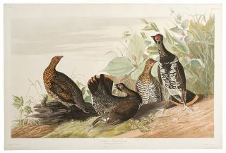 Spotted or Canada Grouse [Spruce Grouse]. John James AUDUBON