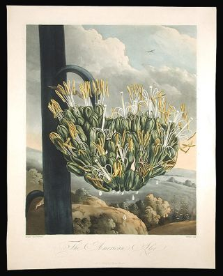 The American Aloe. Robert John THORNTON, - Philip REINAGLE