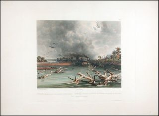 Snags (sunken trees) on the Missouri. Karl BODMER