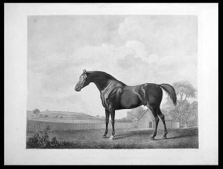 Protector. George STUBBS, George Townly STUBBS