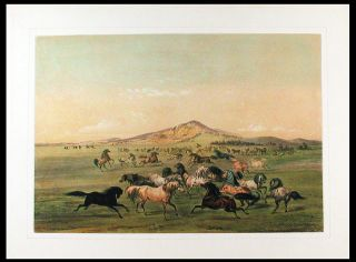 Wild Horses at Play. George CATLIN
