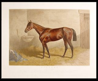 Firenze Queen of the Turf 1890 by Glenelg dam Florida... Owned by J.B. Haggin Esq. Henry STULL