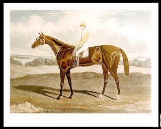 Sainfoin. Winner of the Derby Stakes at Epsom 1890... Won also the Astley Stakes at Lewes 1889....