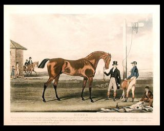 Moses Bred by His Royal Highness the Duke of York in 1819, got by Whalebone, his dam by...