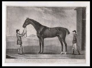 This excellent Horse Marquis, got by the Godolphin Colt is the Property of Mr. Vernon won 300...