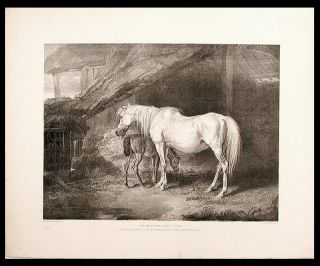 Primrose and Foal. James WARD