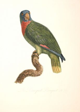 [Le Perroquet Bouquet (Red-necked Amazon [Amazona arausiaca])]