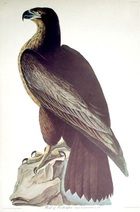 "Bird of Washington. From ""The Birds of America"" (Amsterdam Edition). John James AUDUBON"