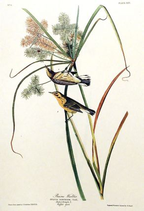 "Prairie Warbler. From ""The Birds of America"" (Amsterdam Edition). John James AUDUBON"
