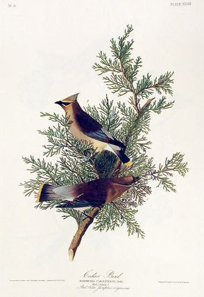 "Cedar Bird. From ""The Birds of America"" (Amsterdam Edition). John James AUDUBON"