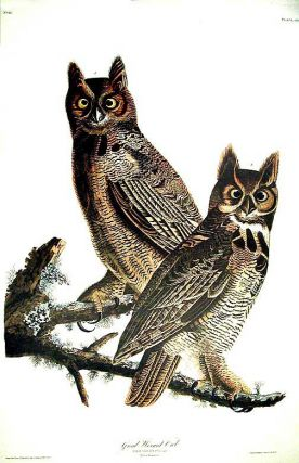 "Great Horned Owl. From ""The Birds of America"" (Amsterdam Edition). John James AUDUBON"