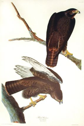 "Black Warrior. From ""The Birds of America"" (Amsterdam Edition). John James AUDUBON"