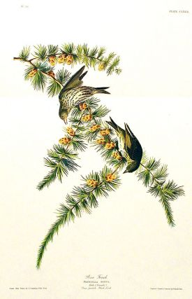 "Pine Finch. From ""The Birds of America"" (Amsterdam Edition). John James AUDUBON"