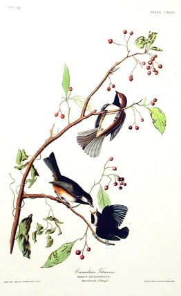 "Canadian Titmouse. From ""The Birds of America"" (Amsterdam Edition). John James AUDUBON"