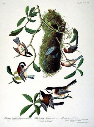 "Chestnut-backed Titmouse, Black-capt Titmouse, Chestnut-crowned Titmouse. From ""The Birds of..."