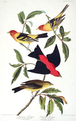 """Louisiana Tanager, Scarlet Tanager. From """"The Birds of America"""" (Amsterdam Edition)"""
