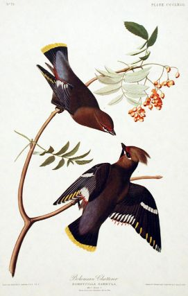 "Bohemian Chatterer. From ""The Birds of America"" (Amsterdam Edition). John James AUDUBON"