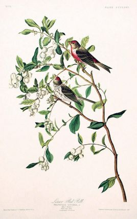 "Lesser Red-Poll. From ""The Birds of America"" (Amsterdam Edition). John James AUDUBON"