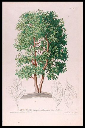 Laurus [Laurel]. After George Dionysius EHRET