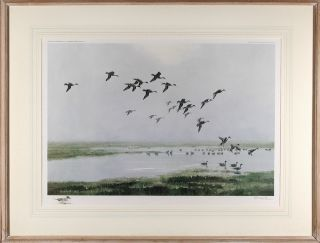 Pintails on a Hazy Day. After Sir Peter Markham SCOTT