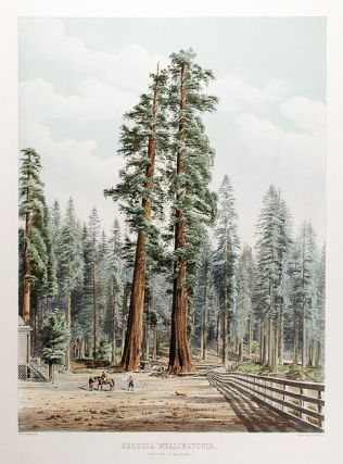 Sequoia Wellingtonia. The Two Guardsmen. Edward James RAVENSCROFT, - W. H. MCFARLANE, lithographer