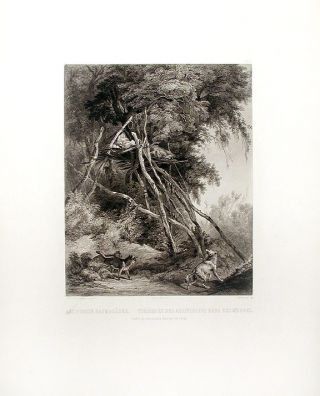 Tombs of Assiniboin Indians on Trees. Karl BODMER