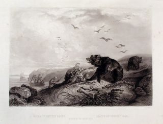 Hunting of the Grizzly Bear. Karl BODMER